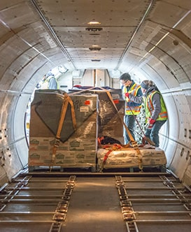 Some workers inside an airplane